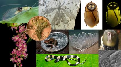 especies-1.jpg-1.jpg