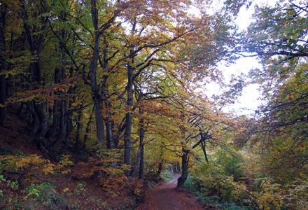 floresta_4-1.jpg