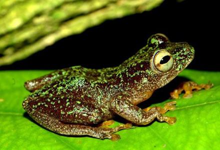 frog_1-1.jpg