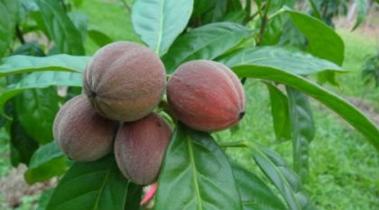 fruto-1.jpg