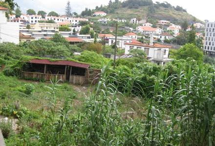 horta-urbana-1.jpg
