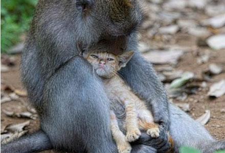 macaco-1.jpg
