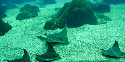 oceanariolx.jpg.jpg