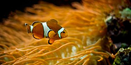 peixespalhaco.jpg.jpg