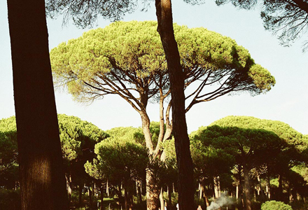 pinheiro-1.jpg