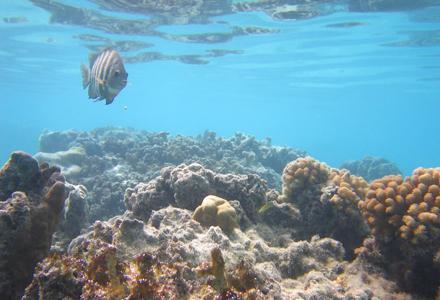 reef-1.jpg