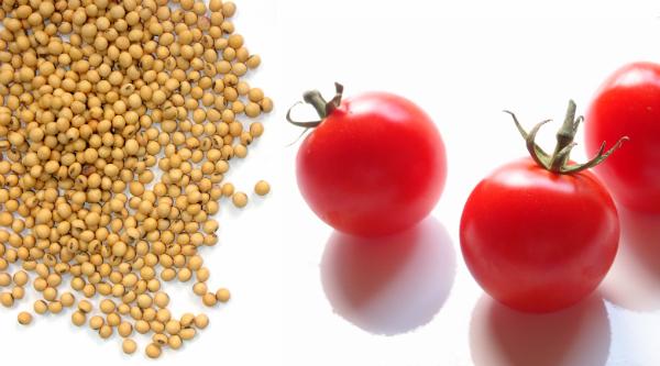 tomatosoja.png