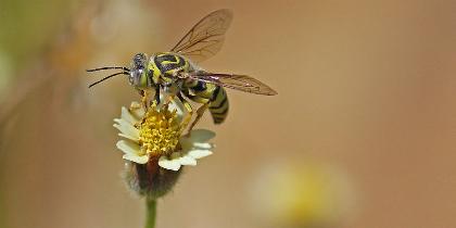wasp.jpg.jpg