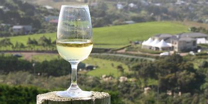 winevista.jpg.jpg